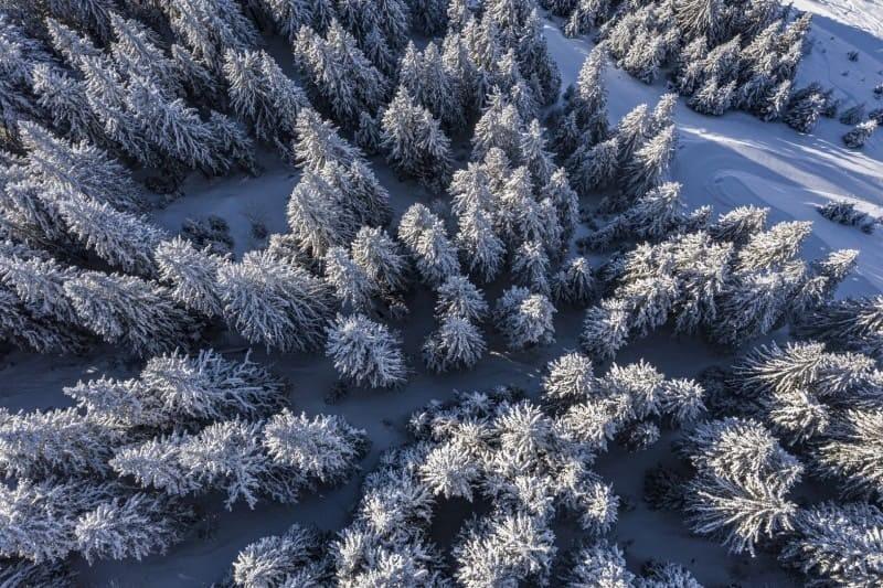 les arbres de Chatel sous la neige